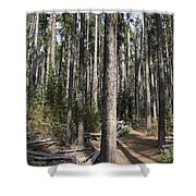Storm Point Trail Forest Shower Curtain