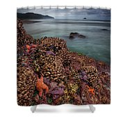 Stormy Life At Sea Shower Curtain