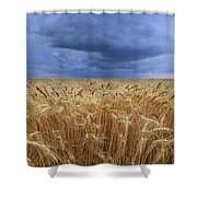 Stormy Wheat Field Shower Curtain