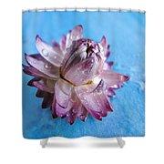 Straw Flower On Blue Shower Curtain