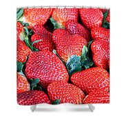 Strawberries 8 X 10 Shower Curtain