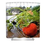 Strawberries And Rain Shower Curtain