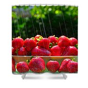 Strawberries And Summer Showers Shower Curtain