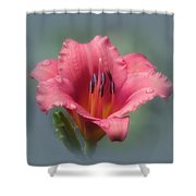Strawberry And Blue - Daylily Shower Curtain