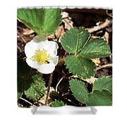 Strawberry Flower 2 Shower Curtain