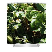 Strawberry Flower And Bee Shower Curtain