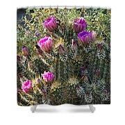 Strawberry Hedgehog Cactus  Shower Curtain
