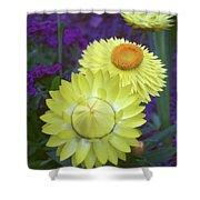 Strawflower Perfection  Shower Curtain