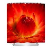 Strawflower Sombrero Shower Curtain
