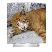 Stray Cat Sleeps On The Floor-1 Shower Curtain
