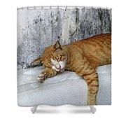 Stray Cat Sleeps On The Floor-2 Shower Curtain