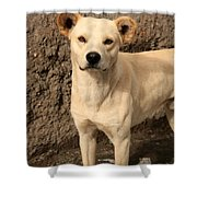 Stray White Dog Shower Curtain