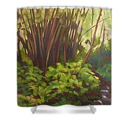 Stream Near Akaka Falls Shower Curtain
