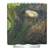 Stream Of Weeds IIi Shower Curtain