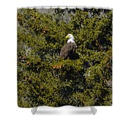 Streamside Eagle Shower Curtain