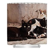 Street Cats - Portugal Shower Curtain