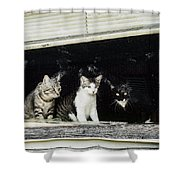 Street Viewing Shower Curtain