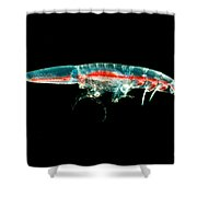 Streetsia Amphipod Shower Curtain