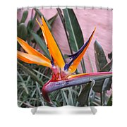 Strelitzia Double Bloom Shower Curtain