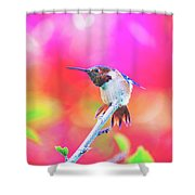 Stretch  Shower Curtain