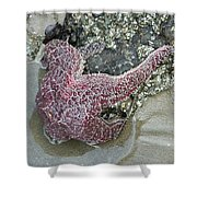 Stretched Starfish Shower Curtain