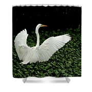 Stretching My Wings Shower Curtain
