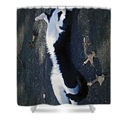 Stretchy Cat Shower Curtain