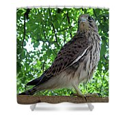 Strike A Pose Shower Curtain