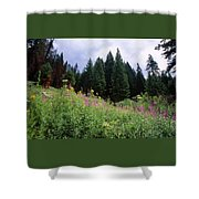Striking Beauty Shower Curtain