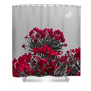 Striking Red  Shower Curtain