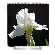 Striking White Iris Shower Curtain