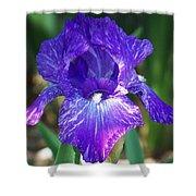 Striped Blue Iris Shower Curtain
