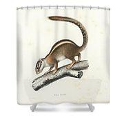 Striped Bush Squirrel, Paraxerus Flavovittis Shower Curtain
