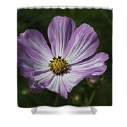 Striped Cosmos 1 Shower Curtain by Roger Snyder