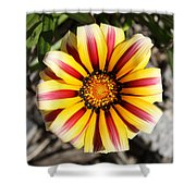 Striped Daisy Square Shower Curtain