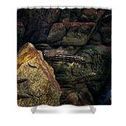 Striped Little Fishes In Aquarium Shower Curtain