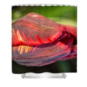 Striped Red Tulip Shower Curtain