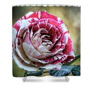 Striped Rose  Shower Curtain