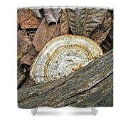 Striped Shelf Fungus - Basidiomycota Shower Curtain