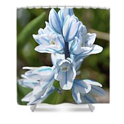 Striped Squill Emerging Shower Curtain