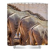 Stripes  7578 Shower Curtain