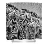 Stripes  7578bw Shower Curtain