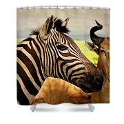 Stripes And Horns 2 Shower Curtain