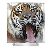 Stripes, No. 16 Shower Curtain