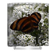 Stripes On Petals Shower Curtain