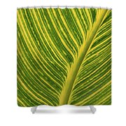 Stripey Leaf Shower Curtain