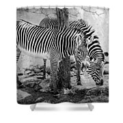 Stripped Pair Shower Curtain by Jeff Swanson