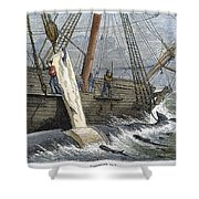 Stripping Whale Blubber Shower Curtain by Granger