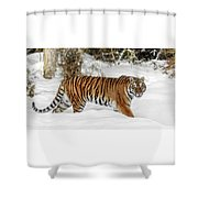 Stroll In The Snow Shower Curtain