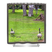 Strolling Canadian Geese Shower Curtain